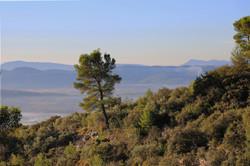 Vue récolte de Safran Cotignac