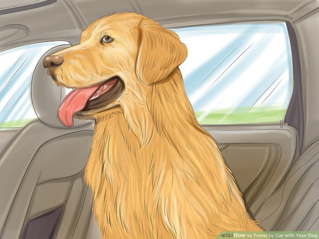 How to Travel by Car with Your Dog