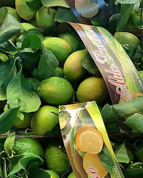 Green lemons verdello 24-09-2019.jpg
