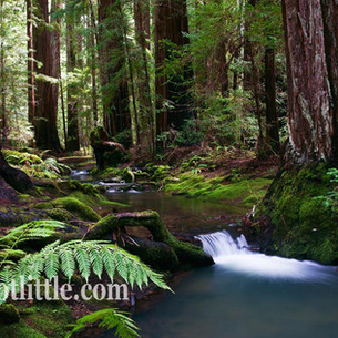 Montg Woods Stream