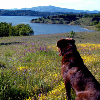 Lake with Spring Flowers with Katie
