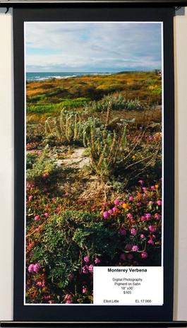 Coastal Flowers Monterey