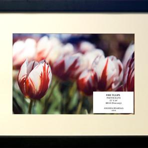 Fire-Tulips