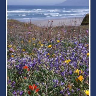 Coastal Flowers 5