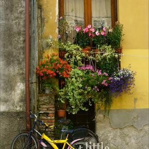 Yellow Bike, Lucca