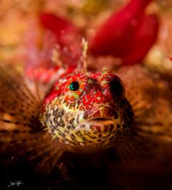 female scalyhead.jpg