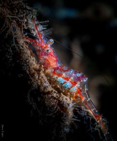 shrimp 20jul2018.jpg