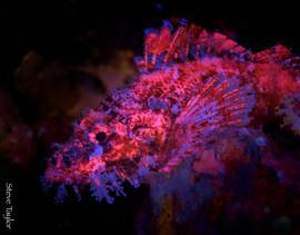 Fluoro scorpion.jpg
