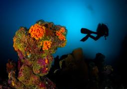 diver & cupcorals, ev.3.jpg