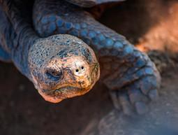 tortoise-dehaze.jpg