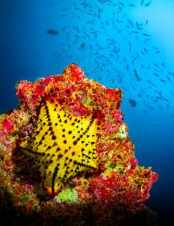 yellow star2c.jpg