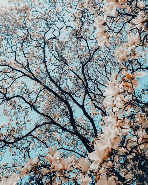 Lightroom-Wedding-Presets-IDO-Tree-Bloss