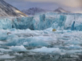 6.+Polar+Bear+and+Monaco+Glacier,+Svalba