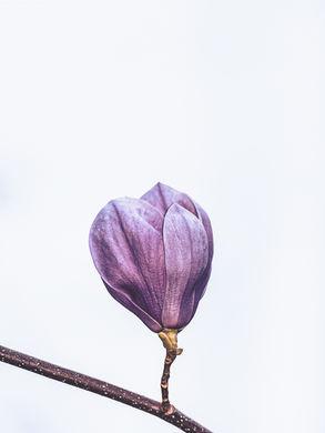 Film-Presets-SIN-pink-flower-blossom.jpg