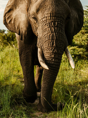Okavango-Lightroom-Preset.jpg
