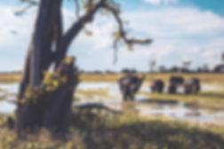 Landscape-Lightroom-Presets-SIN-Botswana