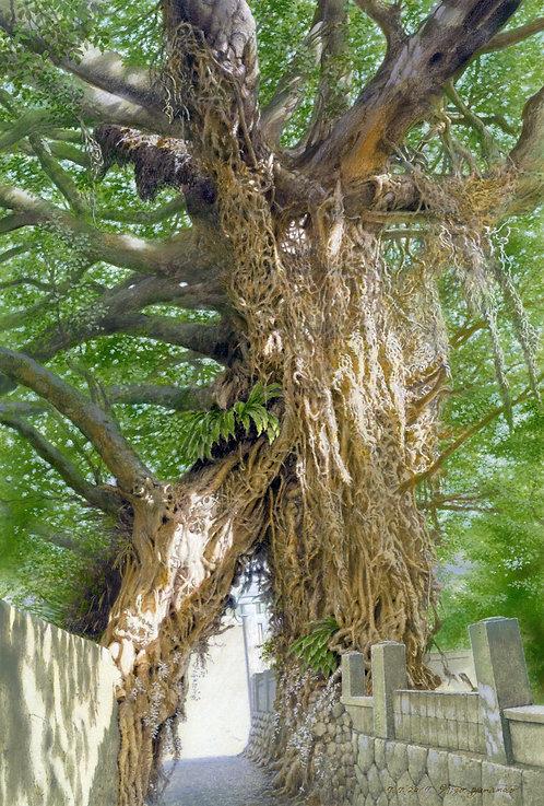奈良尾神社のアコウの樹(五島百景)クリアファイル