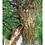Thumbnail: 奈良尾神社のアコウの樹(五島百景)ポストカード