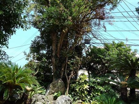 🍂山本二三美術館の中庭🍂