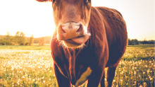 Workplace communication in times of uncertainty - lessons learnt from the 'mad cow disease' public h
