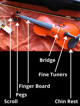 basic-string-instrument-anatomy (1).png