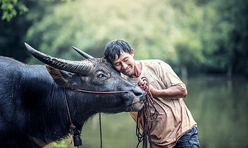 animals-1782431_960_720.jpg
