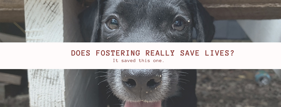 Fostering Saves Lives (1).png