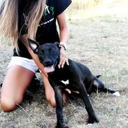dog in san diego county.jpg