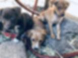 fall pups.jpg