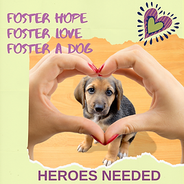 Foster Hope Foster Love Foster a Dog (2)