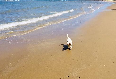 Dolly Beach.jpg