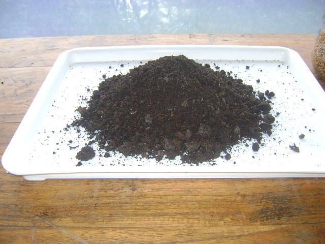 Tierra para germinar semillas en bandeja