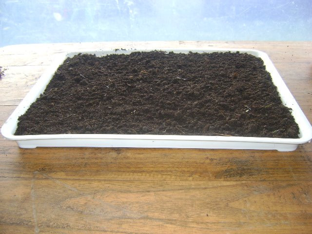 Tierra para germinar semillas