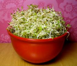 Miniatura-Tazon-de-Alfalfa-germinada.png