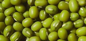 Semillas de Frijol Mungo