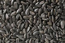Semillas de Girasol oleaginoso