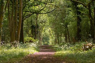 Hattiers Wood