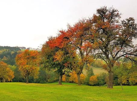 Золотая осень в Нижней Австрии