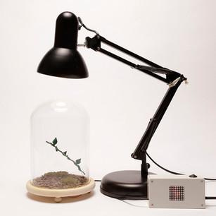 Fake Plants Need Light Too