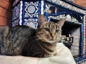 Бомонд с кошками на Волге