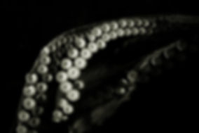 tentacles bw.jpg