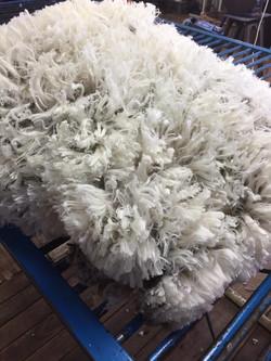 Adina wool.jpg