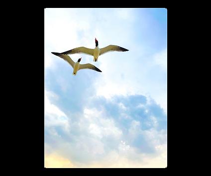 birds fb.png