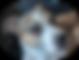 Screen Shot 2020-06-09 at 12.23.17 PM.png