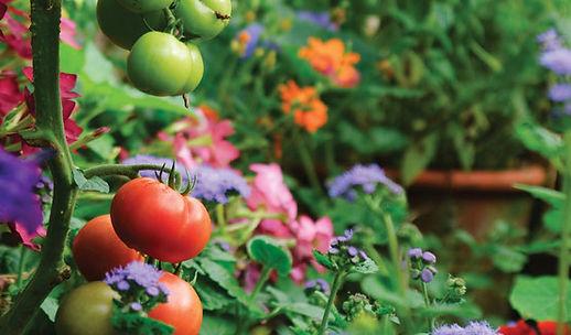 istock_vegetable_garden.jpg