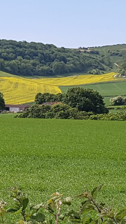 Farm view from the footpath