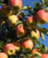 Fruit Orchard Wedding in the Okanagan