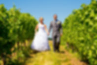 Wineyard and cherry blossom wedding at the Okanagan Valley