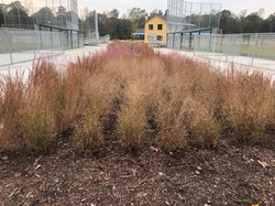 2 Bioretention Features at Pine ForkPark