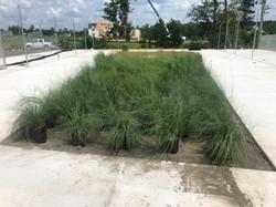 1 Bioretention Features at Pine Fork Par